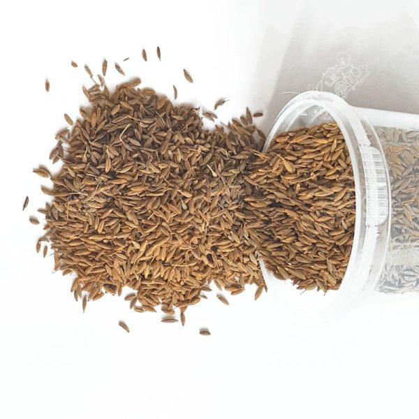 Des graines séchées de Cumin de Madagascar