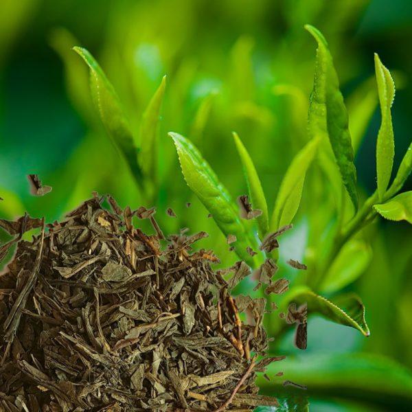Thé vert Sencha Longévité heureuse
