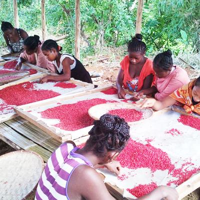Les épices de Madagascar